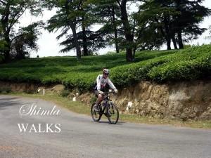 Cycling in Shimla